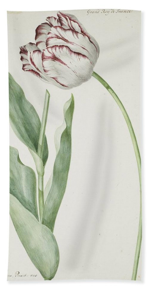 Tulip Grand Roy De France Bath Sheet featuring the painting Tulip Grand Roy De France by Jan Laurensz