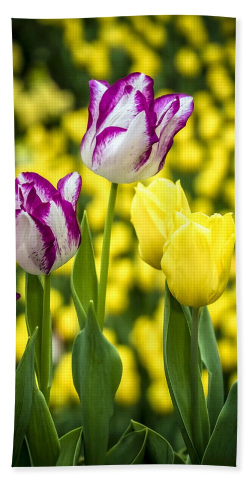 Agriculture Bath Sheet featuring the photograph Tulips Garden by Jijo George