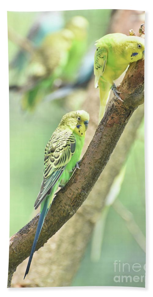 Budgie Hand Towel featuring the photograph Two Adorable Budgie Parakeets Living In Nature by DejaVu Designs