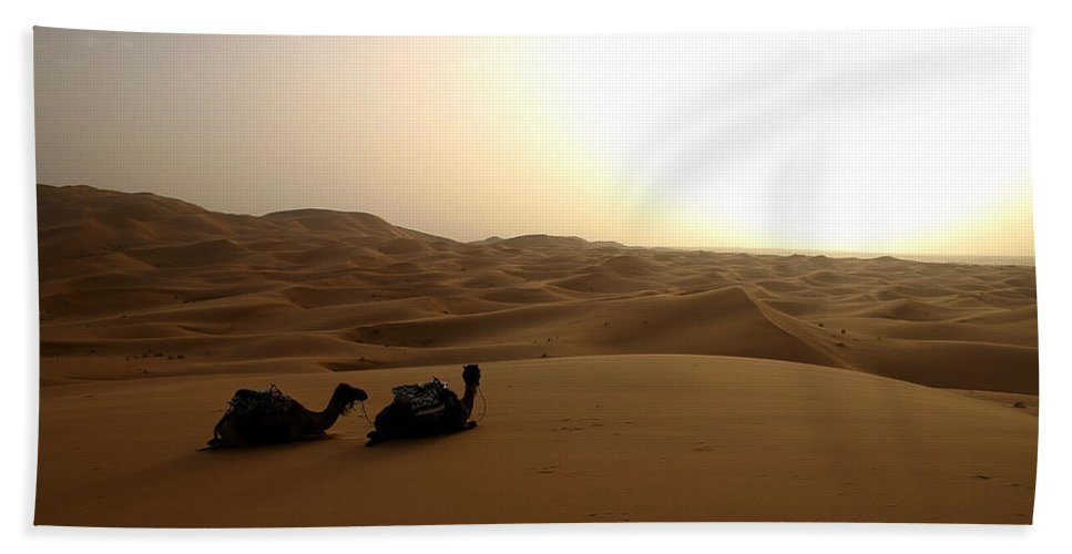 Camel Bath Towel featuring the photograph Two Camels At Sunset In The Desert by Ralph A Ledergerber-Photography