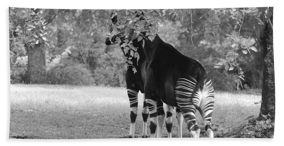 Animal Hand Towel featuring the photograph Two Stripers by Rob Hans