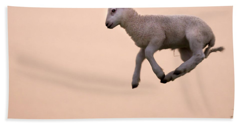 Prancing Lamb Hand Towel featuring the photograph Up To The Sky by Angel Ciesniarska