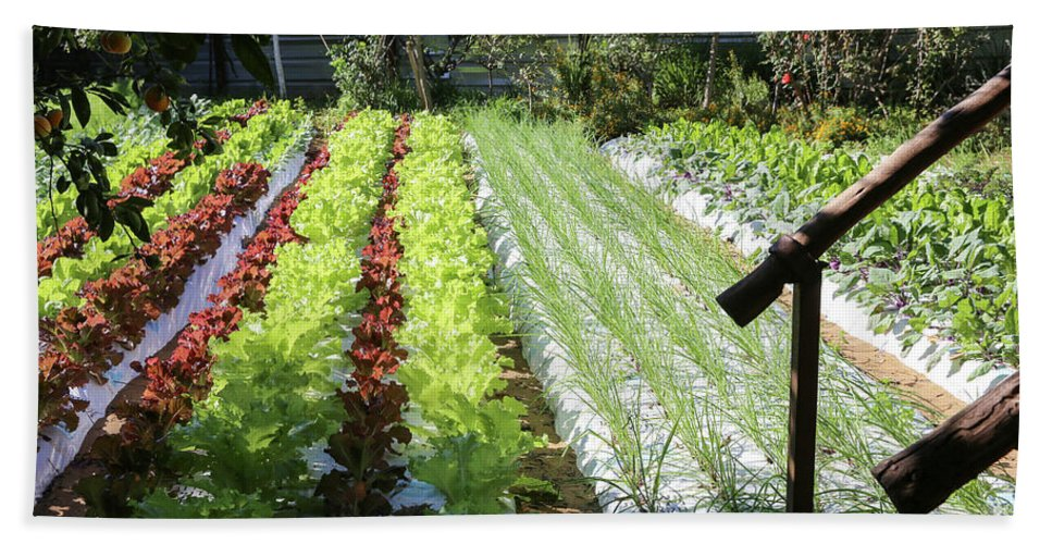 Food Hand Towel featuring the photograph Vegetable Garden by Oren Shalev