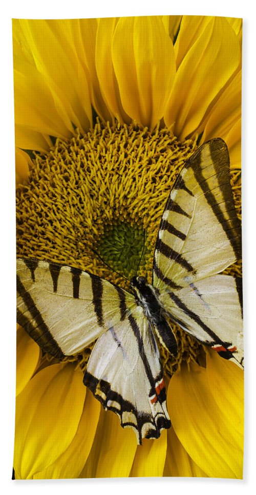 Yellow Hand Towel featuring the photograph White Butterfly On Sunflower by Garry Gay