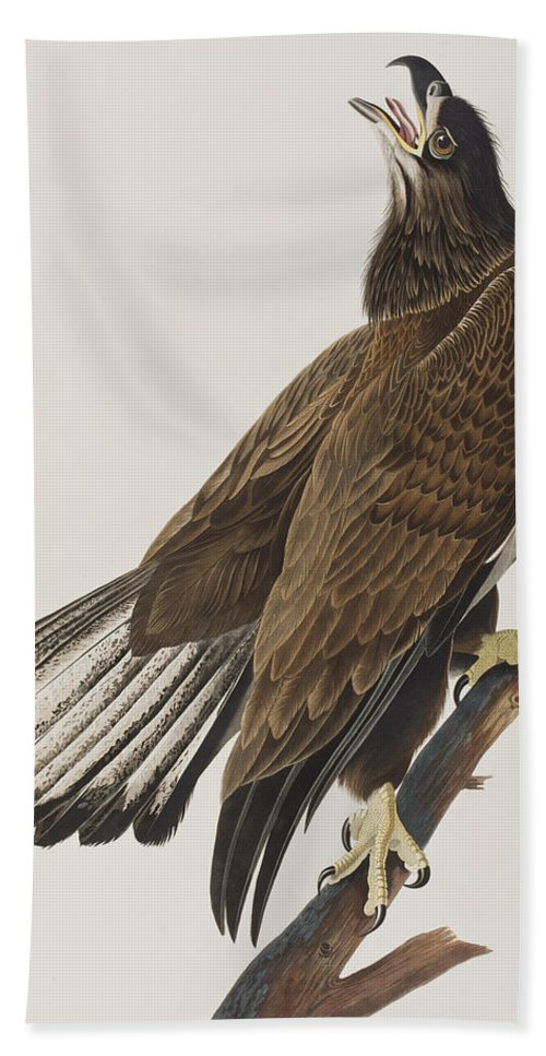 White Headed Eagle Hand Towel featuring the painting White-headed Eagle by John James Audubon