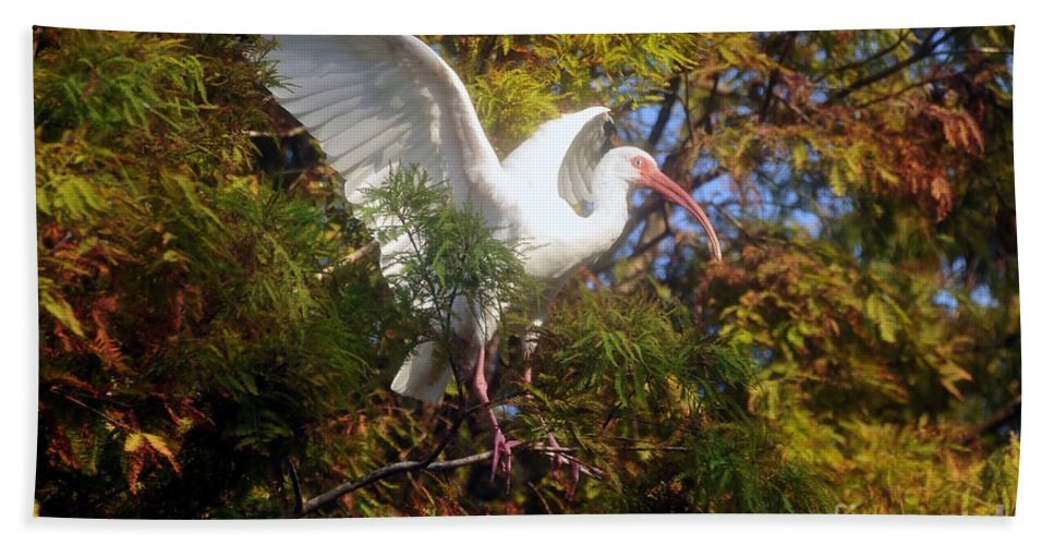 White Ibis Hand Towel featuring the photograph White Ibis by David Lee Thompson
