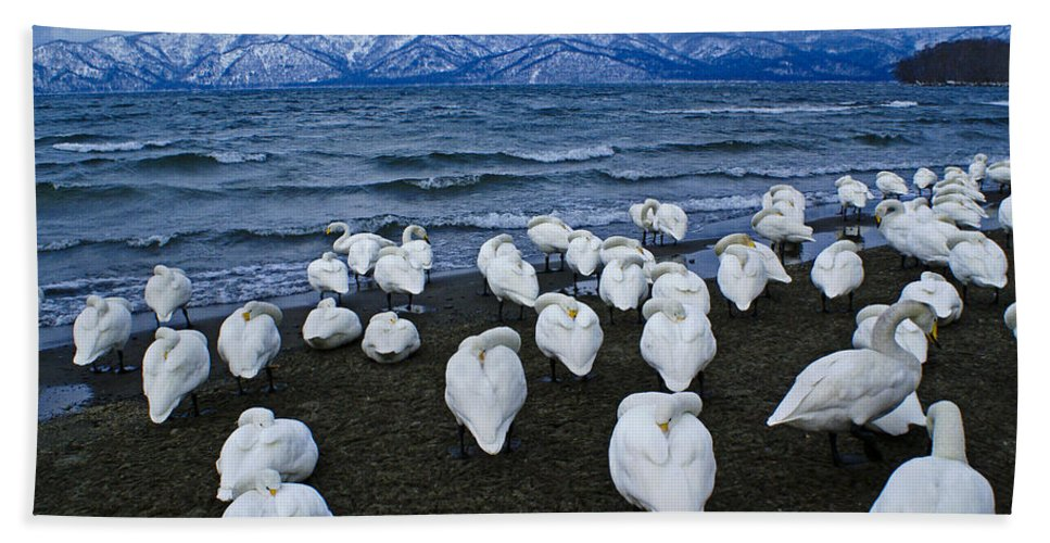 Japan Hand Towel featuring the photograph Whooper Swans In Winter by Michele Burgess