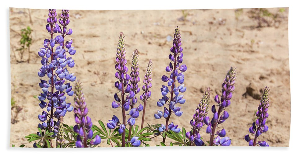 Lupinus Perennis Bath Sheet featuring the photograph Wild Lupine Flowers by Michael Shake