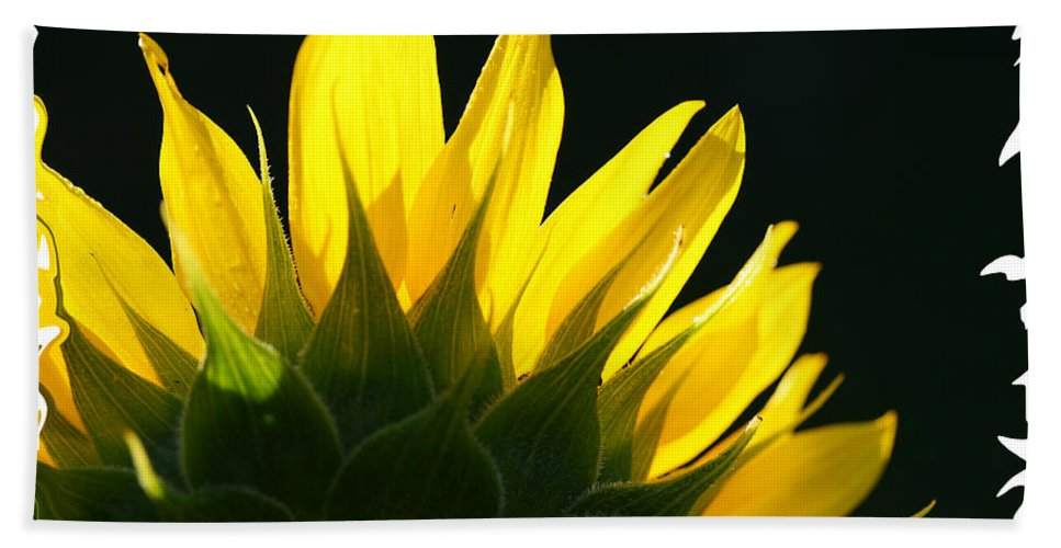 Sunflower Yellow Plant Green Photograph Phogotraphy Digital Art Bath Sheet featuring the photograph Wild Sunflower by Shari Jardina