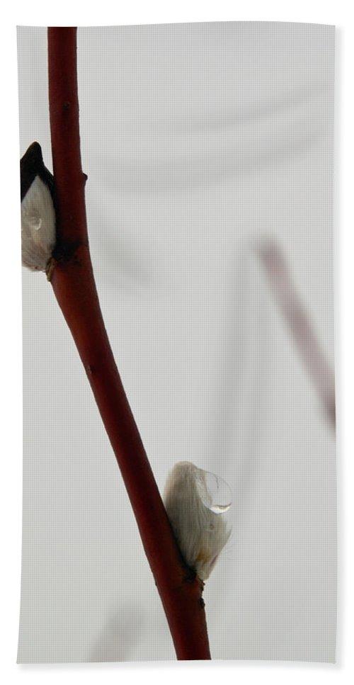 Lehtokukka Hand Towel featuring the photograph Willow Catkins 3 by Jouko Lehto