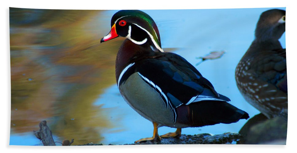 Clay Bath Sheet featuring the photograph Wood Duck by Clayton Bruster