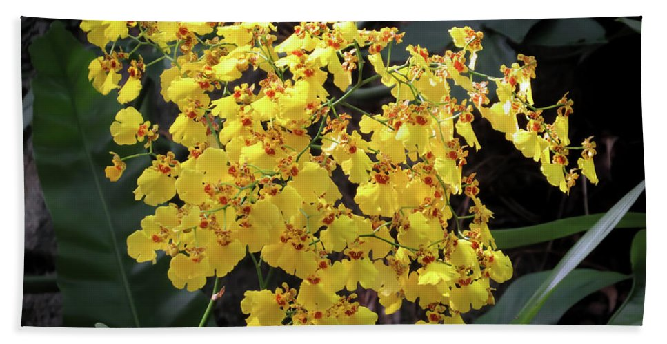 Orchid Bath Towel featuring the photograph Yellow Orchids by Zina Stromberg
