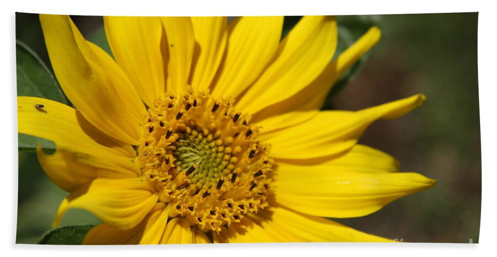 Sunflower Bath Sheet featuring the photograph Yellow Sunflower by Christiane Schulze Art And Photography