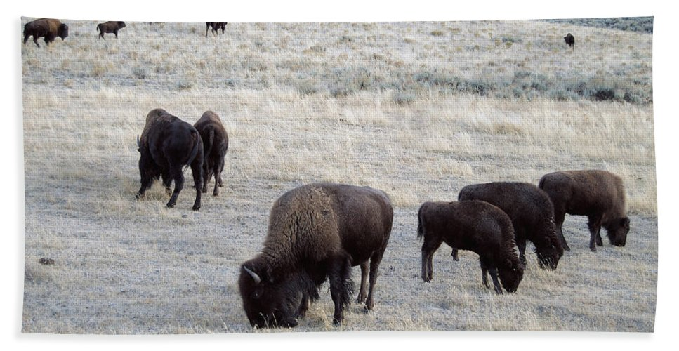 Bison Bath Sheet featuring the photograph Yellowstone Bison by Michael Peychich
