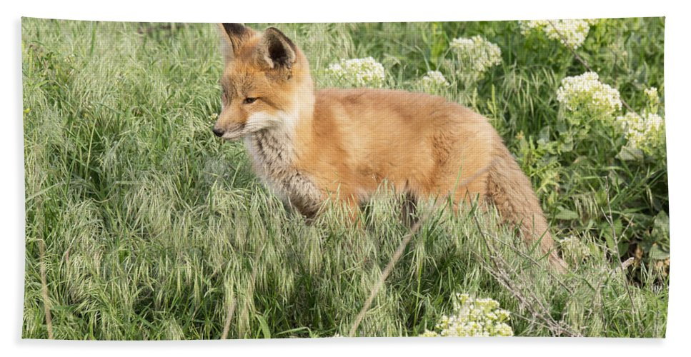 Fox Bath Sheet featuring the photograph Young Red Tailed Fox by Dennis Hammer