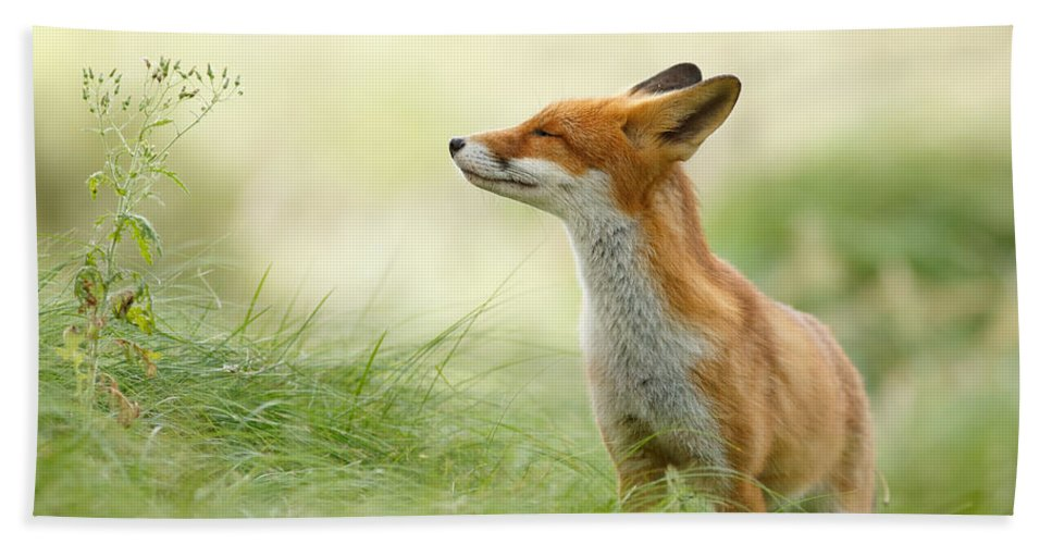 Fox Bath Towel featuring the photograph Zen Fox Series - Zen Fox by Roeselien Raimond