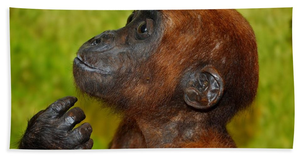 Monkey Hand Towel featuring the photograph Monkey by FL collection