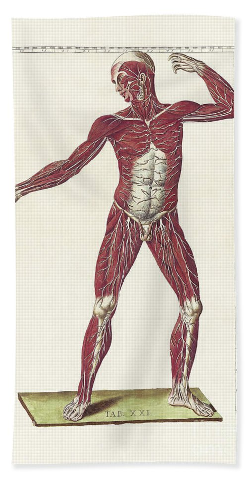 Vertical Bath Sheet featuring the digital art The Science Of Human Anatomy by National Library of Medicine