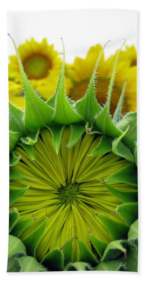 Sunflwoers Bath Towel featuring the photograph Sunflower Series by Amanda Barcon
