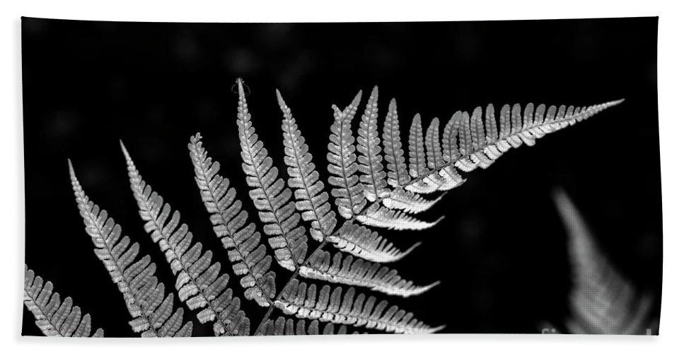 Bellevue Botanical Gardens Hand Towel featuring the photograph Fern Close-up by Jim Corwin