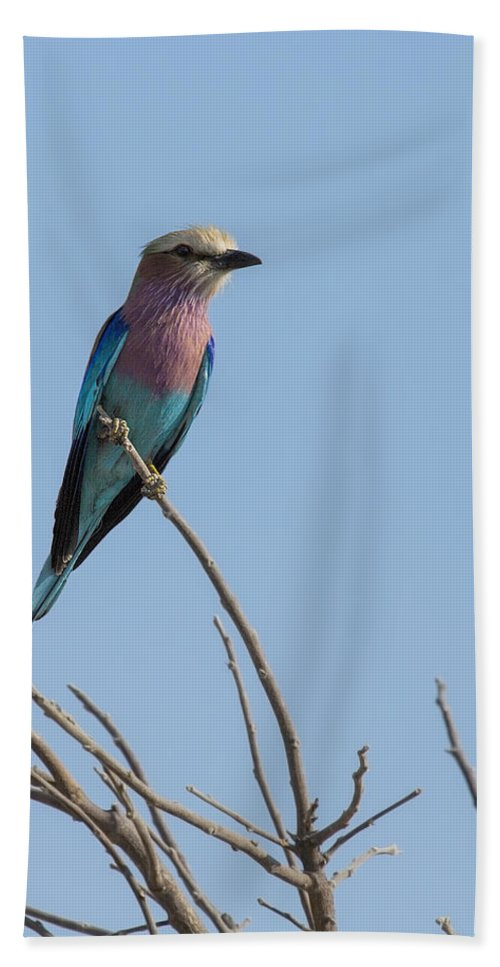 Lilac Breasted Roller Bath Sheet featuring the photograph Lilac Breasted Roller On Alert by Kay Brewer