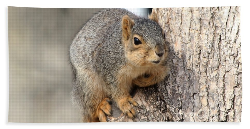 Squirrels Hand Towel featuring the photograph Squirrel by Lori Tordsen