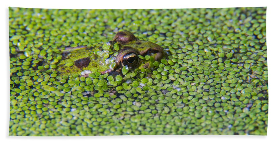 Edible Frog Bath Sheet featuring the photograph 150403p322 by Arterra Picture Library