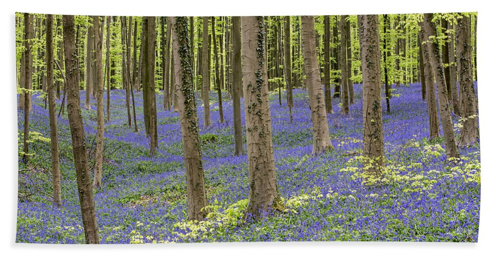 Bluebells Bath Sheet featuring the photograph 150403p366 by Arterra Picture Library