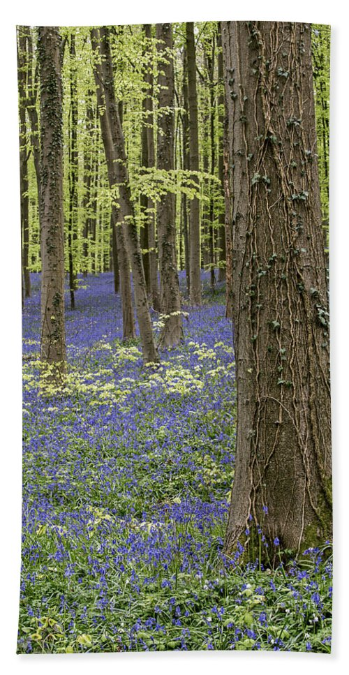 Bluebells Bath Sheet featuring the photograph 150403p367 by Arterra Picture Library