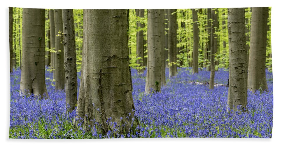 Bluebells Bath Sheet featuring the photograph 150403p369 by Arterra Picture Library
