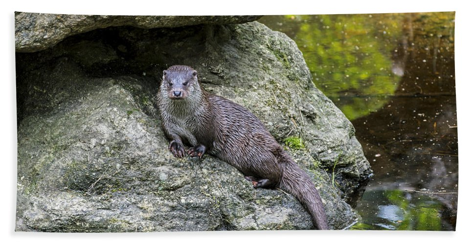 European River Otter Bath Sheet featuring the photograph 150501p132 by Arterra Picture Library