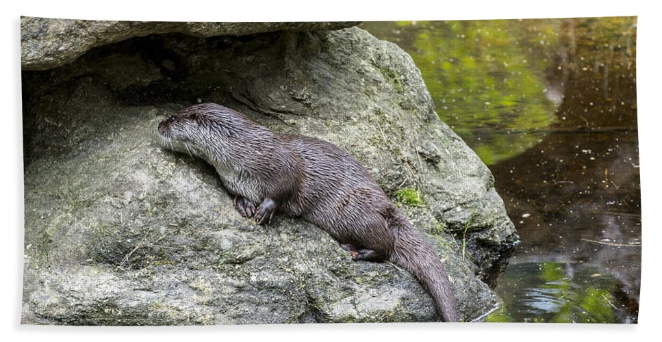European River Otter Bath Sheet featuring the photograph 150501p133 by Arterra Picture Library