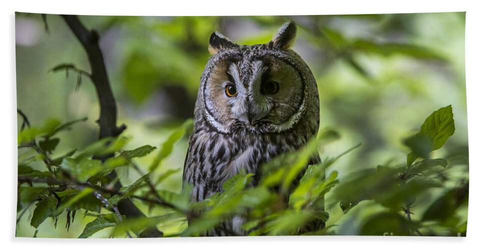 Long-eared Owl Bath Sheet featuring the photograph 150501p136 by Arterra Picture Library