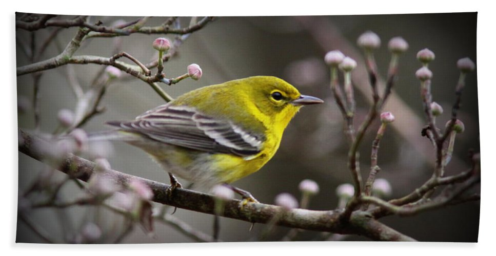 Pine Warbler Hand Towel featuring the photograph 1574 - Pine Warbler by Travis Truelove