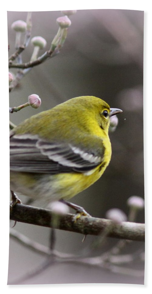 Pine Warbler Hand Towel featuring the photograph 1575 - Pine Warbler by Travis Truelove