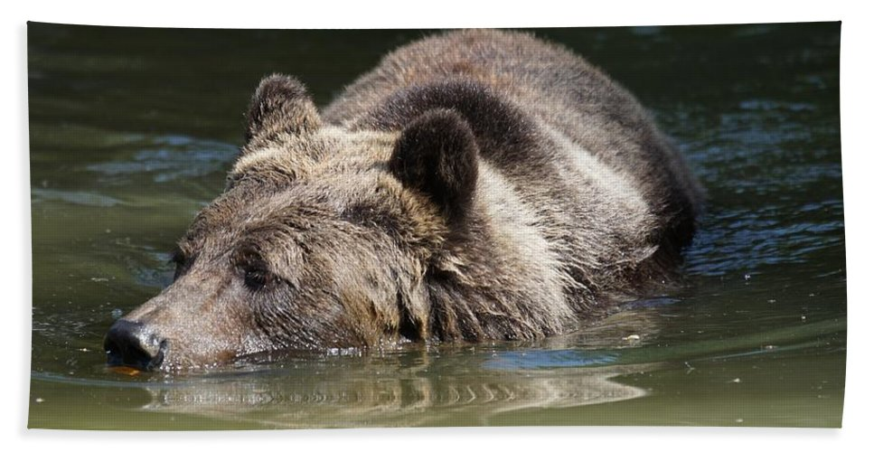Grizzly Hand Towel featuring the photograph Bear by FL collection