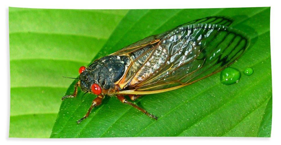 17 Bath Towel featuring the photograph 17 Year Periodical Cicada by Douglas Barnett