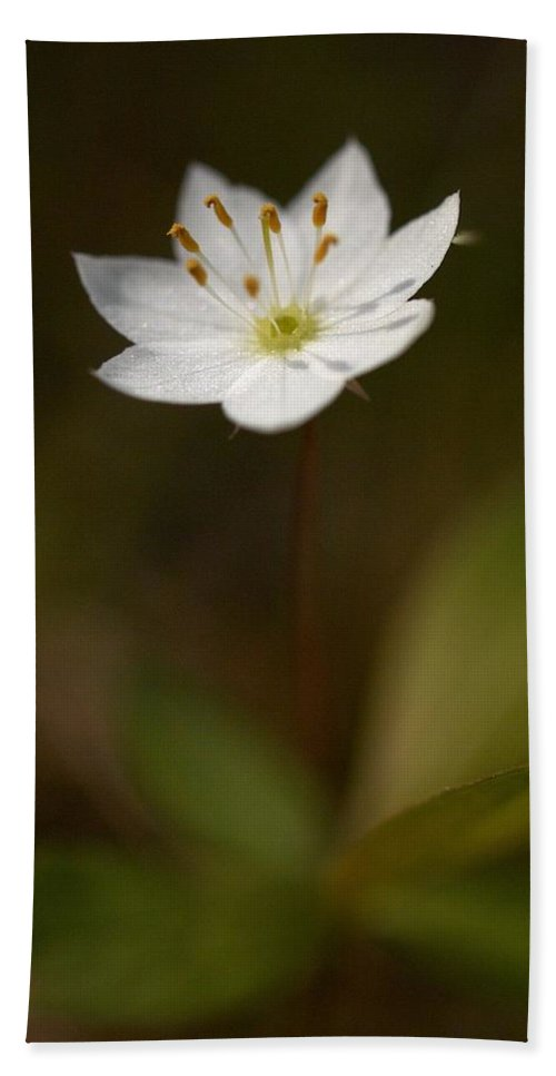 Lehtokukka Hand Towel featuring the photograph Arctic Starflower by Jouko Lehto