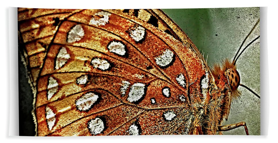 Butterflies Bath Sheet featuring the photograph Aphrodite Fritillary 1 by Ingrid Smith-Johnsen