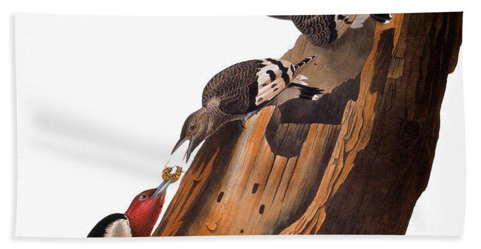 America Bath Sheet featuring the photograph Audubon: Woodpecker by Granger