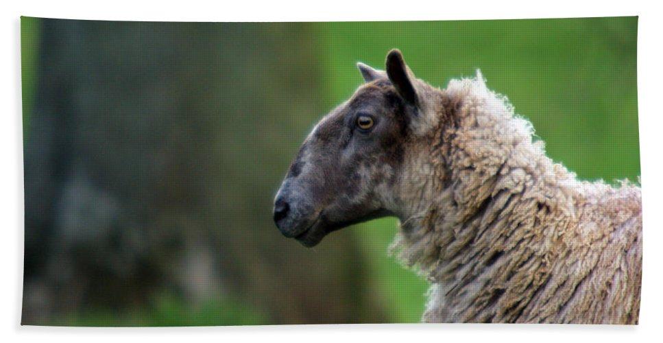 Sheep Bath Towel featuring the photograph Baa Baa by Angel Ciesniarska