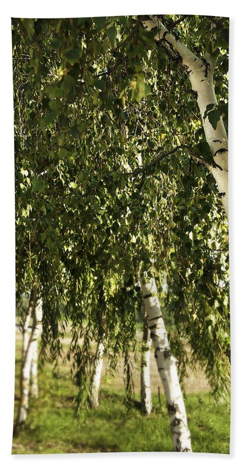Art Bath Sheet featuring the photograph Birch Trees by Svetlana Sewell