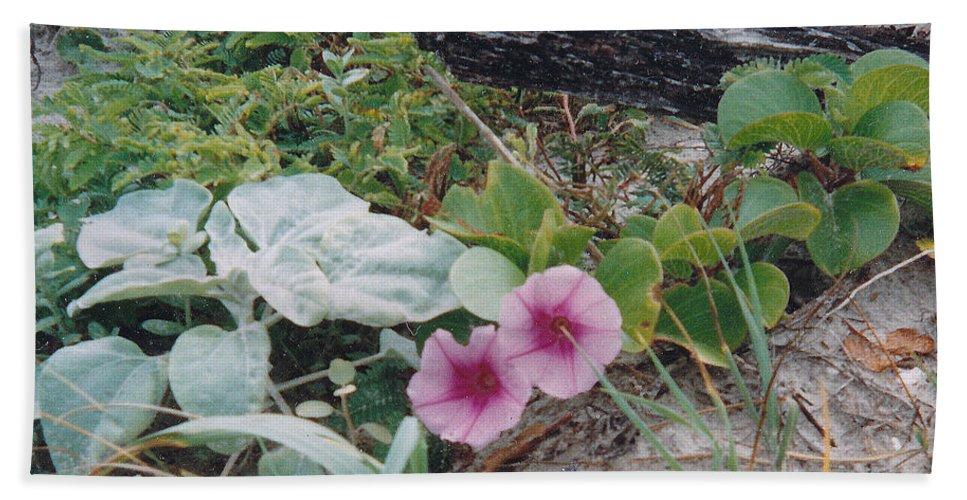 Morning Glory Flowers Beach Plants Sand Bath Sheet featuring the photograph 2 Blooms by Cindy New