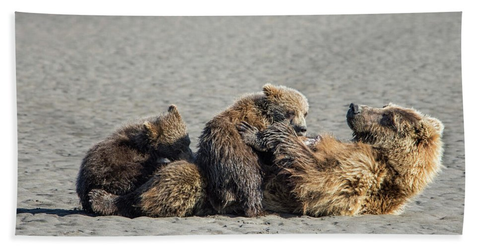 Grizzly Bear Bath Sheet featuring the photograph Break Time by Claudia Kuhn