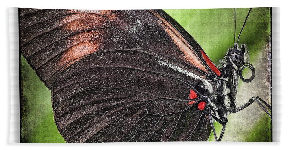 Butterflies Bath Sheet featuring the photograph Brush-footed Butterfly by Ingrid Smith-Johnsen