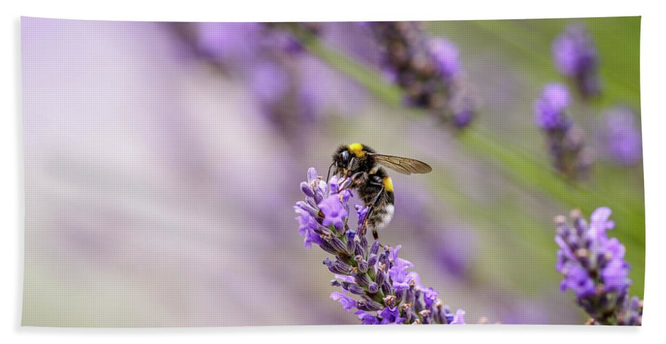 Lavender Hand Towel featuring the photograph Bumblebee and Lavender by Nailia Schwarz