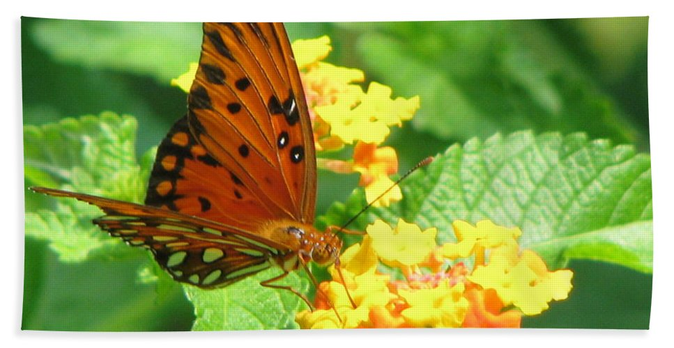 Butterfly Hand Towel featuring the photograph Butterfly by Amanda Barcon