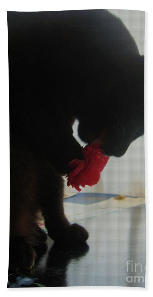 Photograph Cat Black Red Flower Camellia Hand Towel featuring the photograph Cat Eating Camellia by Seon-Jeong Kim