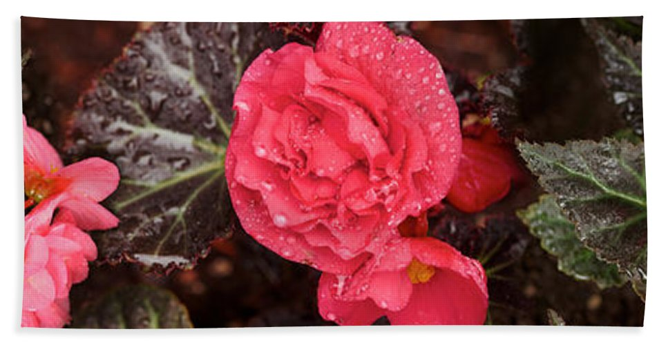 Photography Bath Sheet featuring the photograph Close-up Of Pink Flowers In Bloom by Panoramic Images