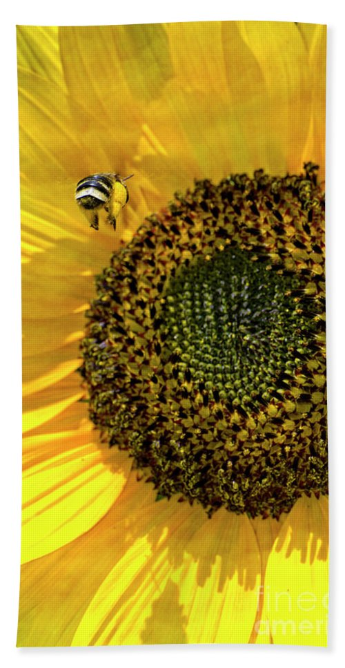 Honey Bee Hand Towel featuring the photograph Coming In For A Landing by Jim And Emily Bush